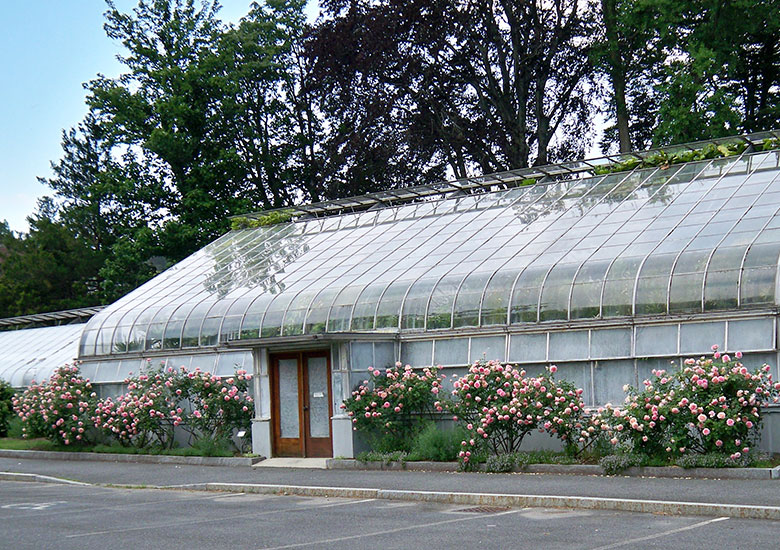 Greenhouse at Durfee Conservatory