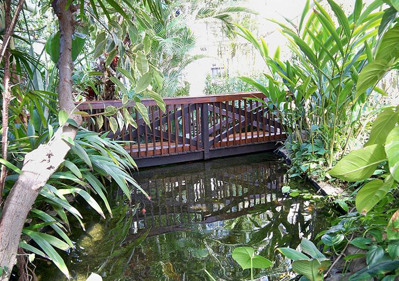 Rainforest at Durfee Conservatory