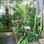Northeast section of Tropical House