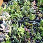 Succulents propagation area