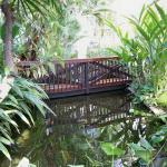 Tropical House Bridge and Fish Pond