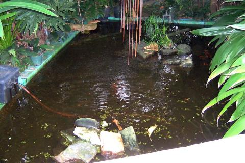 Before Pond Renovation
